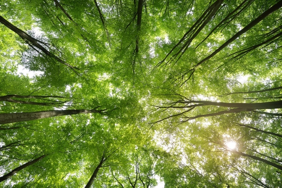 Green forest canopy